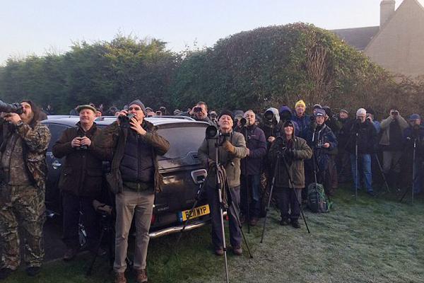 英国小巷现罕见鸟引数百人架相机拍摄