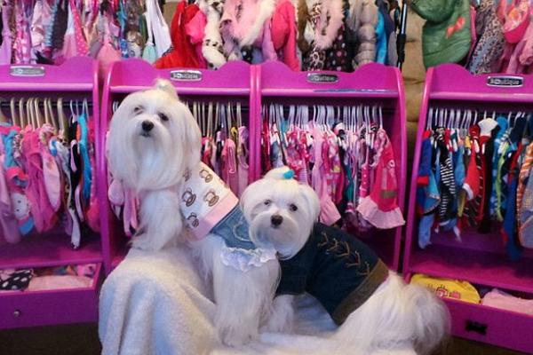 英女子花费数万元为7只宠物狗买衣服