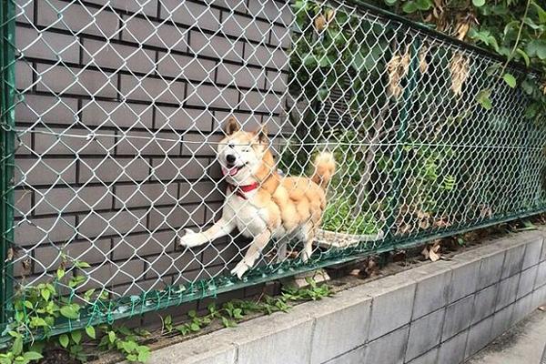 国外网友争相晒爱犬搞笑照片