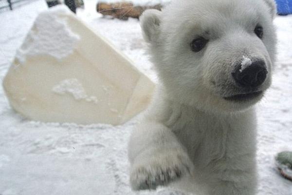 盘点动物们初见白雪的呆萌瞬间