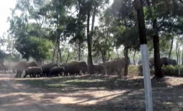 印度60只大象迷路进村损毁25栋房屋