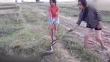 惊呆了!越南两美女揪着蛇尾巴拖行玩耍