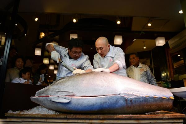 日寿司店老板442万元拍下巨型蓝鳍金枪鱼