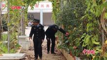 云南茶厂倒闭了老板没带巨龟跑