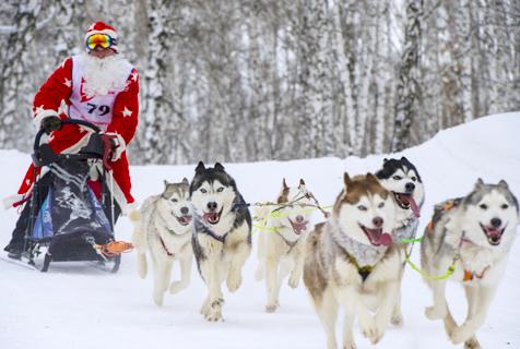 奔跑吧汪星人!俄二哈拉雪橇趣味横生