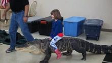 实拍小萝莉骑短吻鳄玩耍 为倡导保护动物