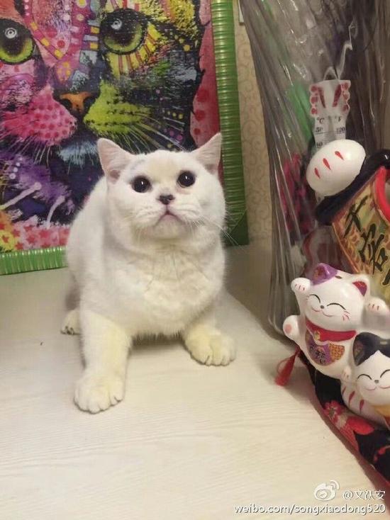 网曝女子买猫后反悔 把小猫剥皮丢宠物店门口