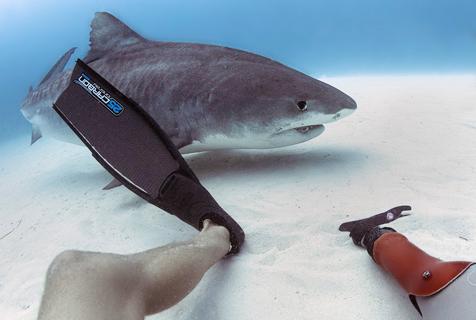 男子与虎鲨亲密潜游 曾被虎鲨咬伤致残