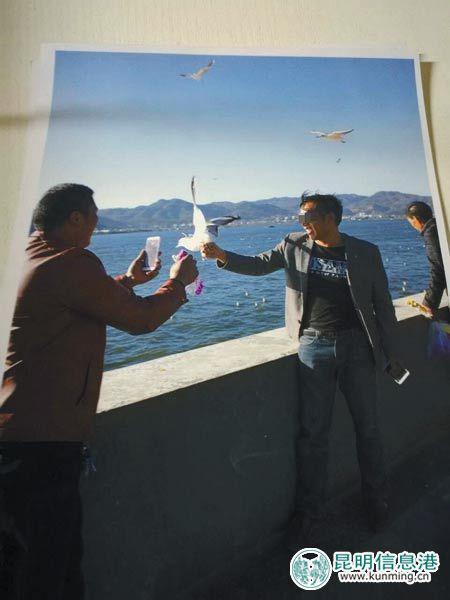 昆明 海鸥/一男子抓海鸥拍照...