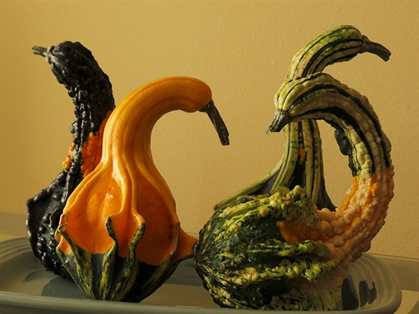有些水果和蔬菜,长着长着就长歪了,而且还歪的别出心裁,模仿起了动物