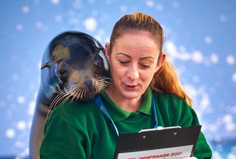 英动物园年度清点 海狮趴人背上撒娇
