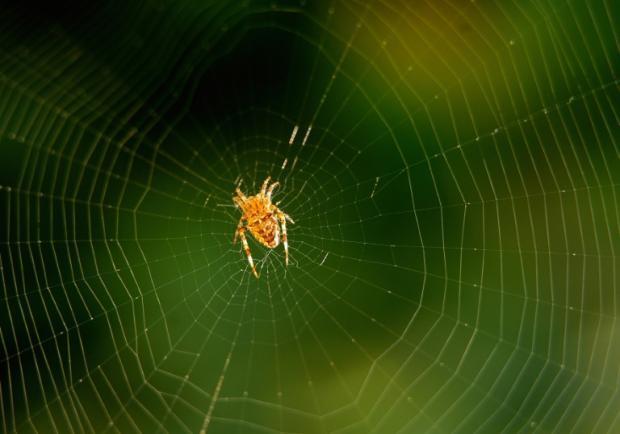 科学家成功复制蜘蛛吐丝能力 再生医学有望