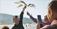 游客抓海鸥拍照 被制止后摔断海鸥翅膀