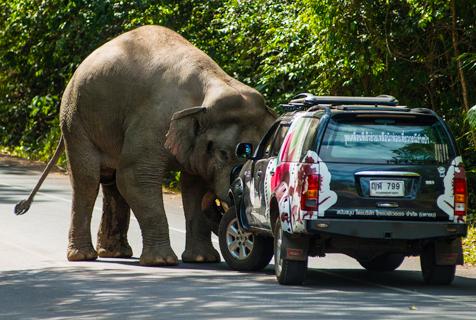 """泰大象横穿马路 掀开""""路障""""霸气十足"""