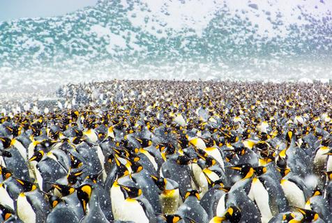 25万只帝企鹅齐聚南极海滩场面超震撼