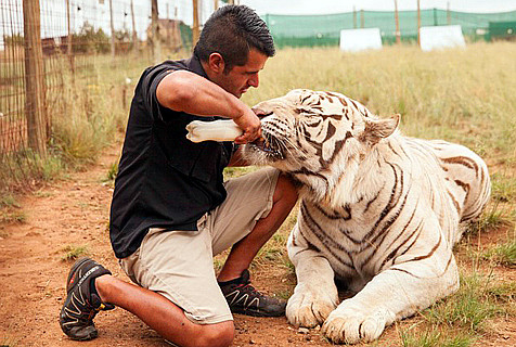 南非夫妻卖豪宅倾家荡产养狮子老虎