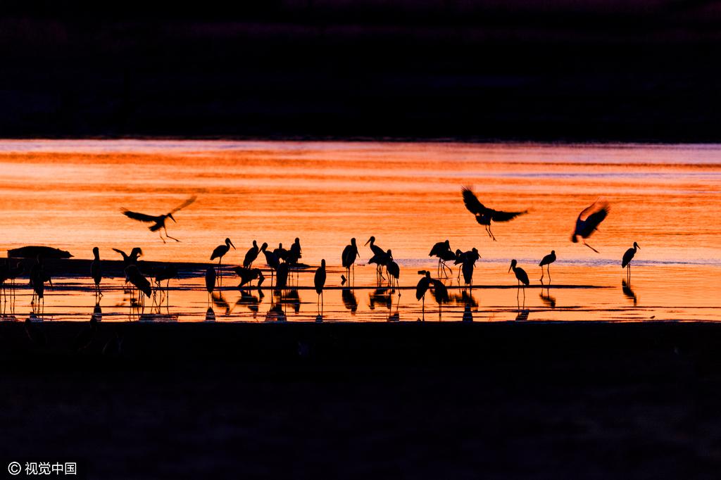 澳摄影师深入非洲六年 拍摄绝美动物剪影