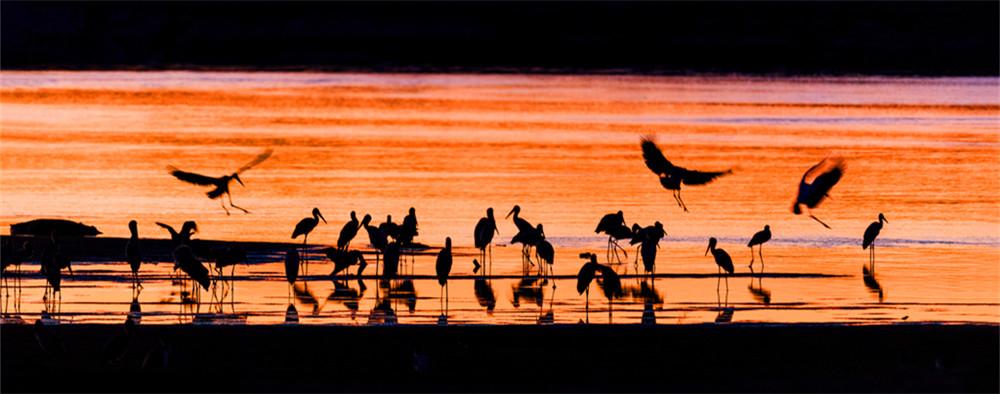 非洲绝美动物剪影