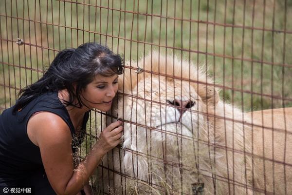 南非:夫妻卖掉豪宅倾家荡产养狮子老虎 称宁愿被老虎杀死