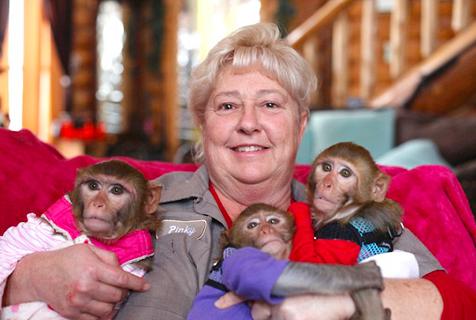 美女子给6只小猴当妈喂奶换尿布教手语