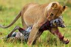 2016环球大观:动物捕食