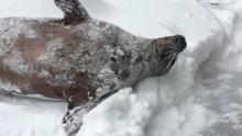 醒来雪花满地,小动物的反应萌翻了