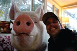 加夫妇养迷你宠物猪却不料长成大肥猪