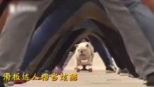 英斗牛犬化身滑板达人 穿越多人隧道