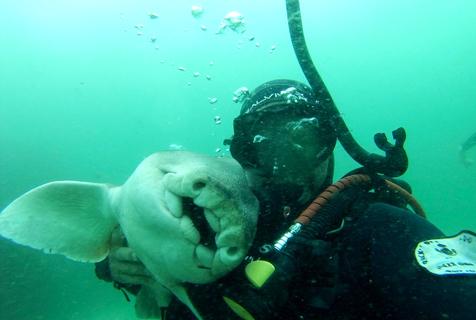 澳洲鲨鱼与潜水教练成好友 撒娇求抱抱