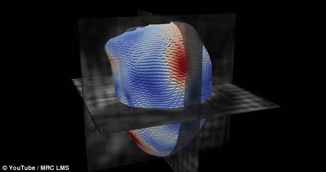 英研发AI可预测心脏病患者发病时间 准确率达80%