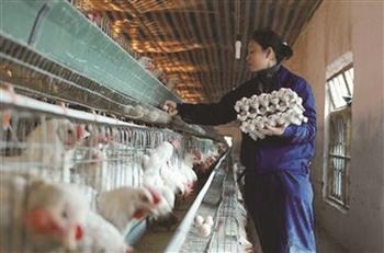 农民工家门口创业还需加把劲