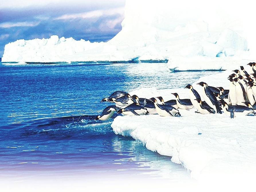 气候变化直接影响南极企鹅