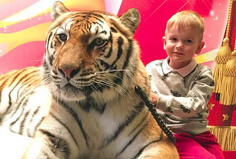 俄家庭养10只老虎当宠物 同住同睡