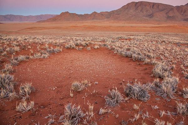 """纳米比亚""""仙女圈""""揭秘:系白蚁与植物共同作用形成"""