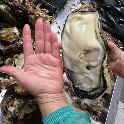真相 | 日本核泄漏区产巨型生蚝 是基因变异?这些核辐射谣言不可信!