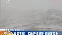 玉树多地持续降雪 影响畜牧业
