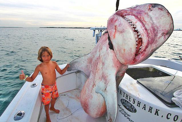 厉害!美国小兄妹跟老爸出海捕鲨鱼