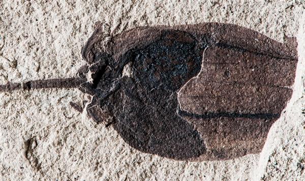 5200万年前的两颗西红柿被找到:恐龙时代美味