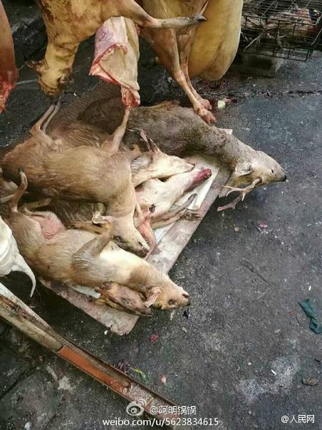 湖南一商贸中心现大量野生动物尸体