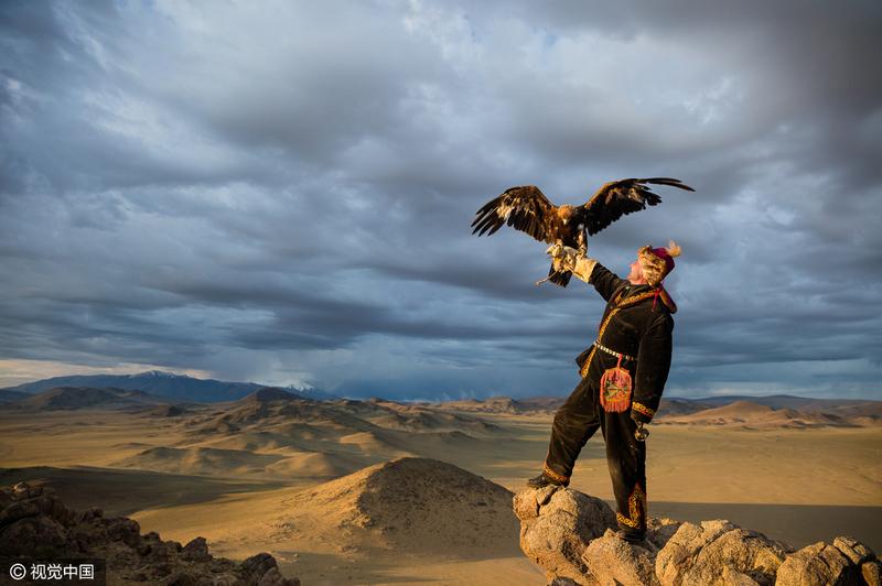 实拍蒙古游牧民族猎鹰训练或面临失传