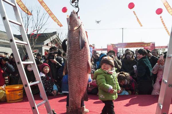 """江苏海安举办冬季捕鱼节 """"鱼王""""比孩子还大"""