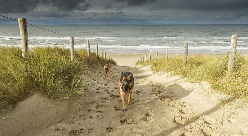 """【环球网综合报道】据英国《每日邮报》1月21日报道,近日,美国《国家地理》杂志公布全世界最美的21处海滩,柬埔寨懒人沙滩拔得头筹。 这些获得提名的沙滩都以原生态的自然风景和蜿蜒的海岸线为特色,在那里,人们可以欣赏未被破坏的原生自然,领略纯正的野外生活。 柬埔寨懒人沙滩以柔软的白沙和清澈见底的海水位居榜首,海浪悠悠拍打在海岸,宁静祥和。颜色与之相对应的位于冰岛的黑沙滩也在名单之上。黑沙滩的沙子呈墨色,玄武岩堆成小山头,也是一道亮丽的景色。 除此之外,还有位于荷兰、被称为""""狗的天下""""的"""
