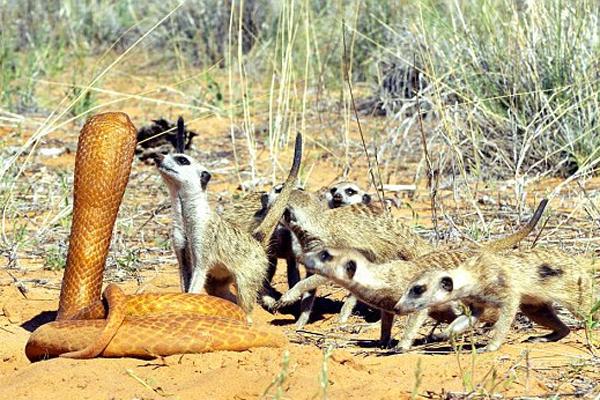 """动物""""间谍""""大揭秘!看摄影师如何近距离拍摄野生动物"""