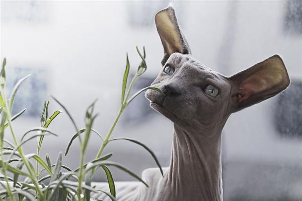 当动物全部都变成方脸:这画面太美不敢看