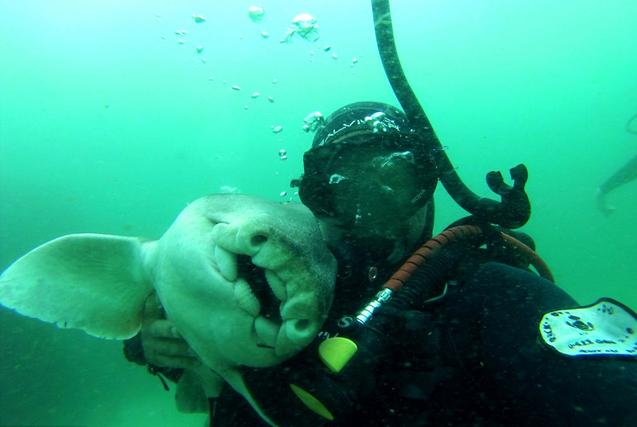环球图片一周精选 鲨鱼向潜水员撒娇求抱抱