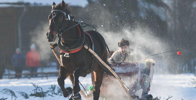 波兰举行传统赛马活动 拉雪橇拉人趣味十足
