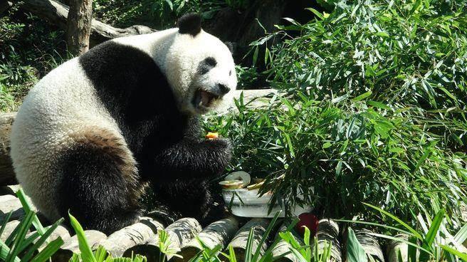 """可爱又可口的菜色,""""圆仔""""开心享用!(图片取自台湾中时电子)"""