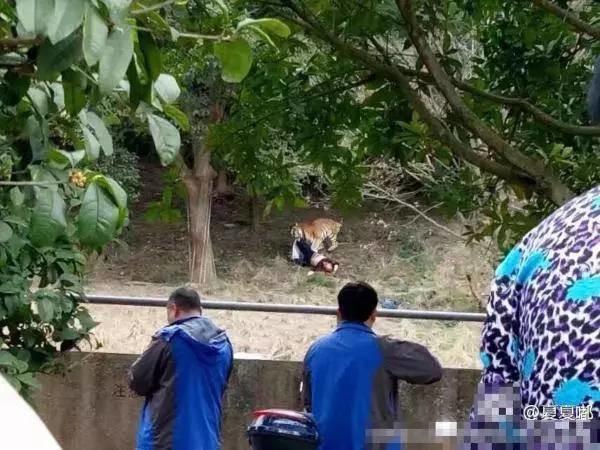 宁波动物园老虎咬死游客