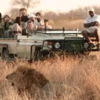 游客在南非动物园被野兽撕咬会被击毙?这又双叒叕是一个谣言