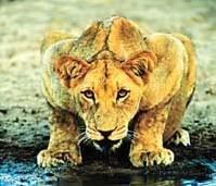 他们说,这是南非野生动物园少有动物袭击人的真相……
